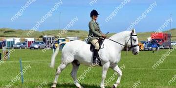 Summer Show Rings 123 at Gloucester Lodge farm on Sunday 16 08 2015