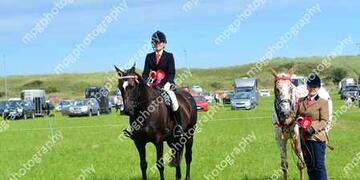 Summer Show Rings 567 at Gloucester Lodge farm on Sunday 16 08 2015