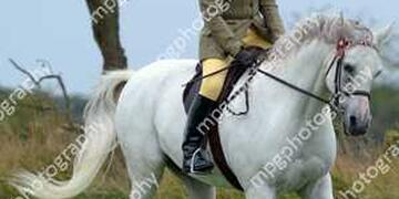 2 - Riding Club Horse 14 2 hh and over