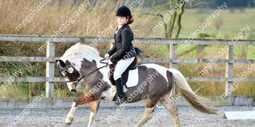 Dressage at  Pastures New on Sunday 24 01 2016