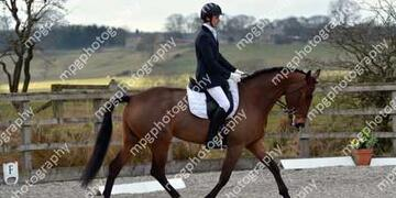 Dressage at Pastures New on Sunday 20 03 2016