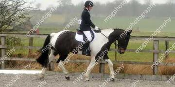 Dressage at Pastures New on Sunday 21 02 2016